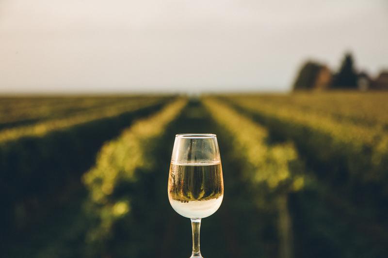 biale-wino-na-tle-winnicy